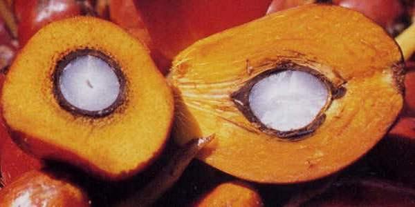 Разрезанные плоды масличной пальмы