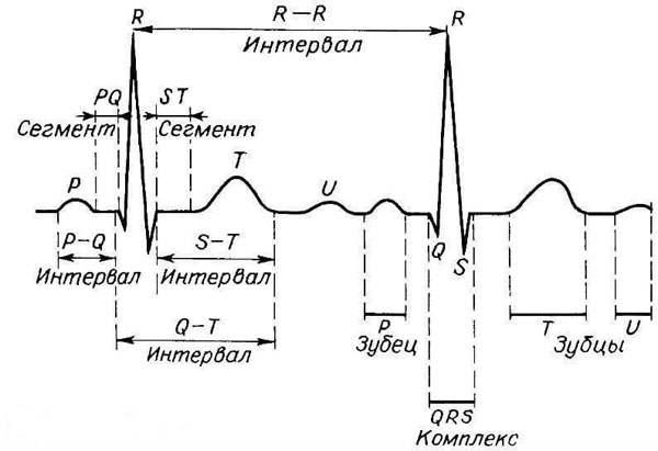 Схема состава кардиограммы