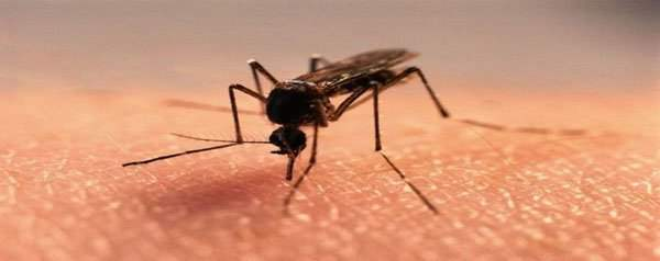 звездочка для снятия раздражения после укуса насекомых