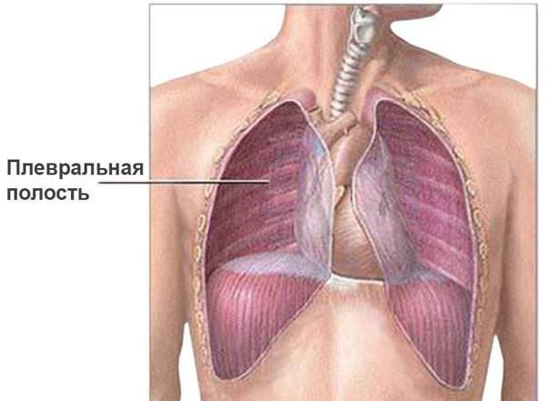Плевральные полости грудной клетки