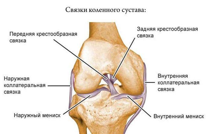 Схематическое изображение расположение связок сустава колена.