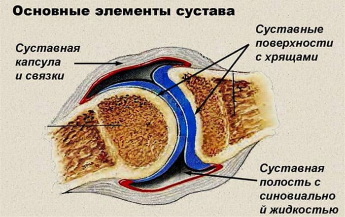 Схематическое изображение строения сустава